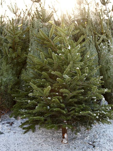 tannenbaumverkauf ippendorf in bonn weihnachtsbaum aus. Black Bedroom Furniture Sets. Home Design Ideas