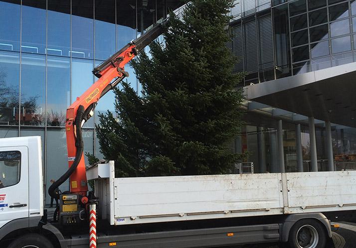 Weihnachtsbaum Service.Tannenbaumverkauf Ippendorf In Bonn Weihnachtsbaum Aus Der Region
